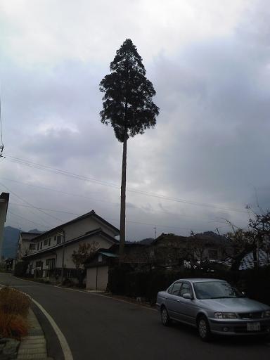 豊丘の一本杉