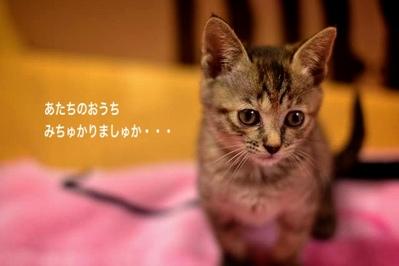 fc2blog_20140116023651046.jpg