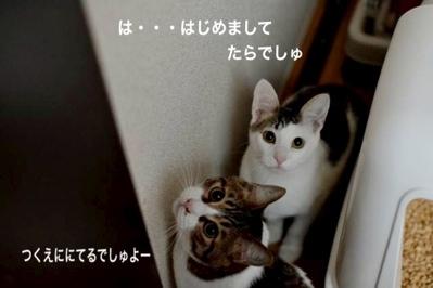 fc2blog_20140124061828811.jpg