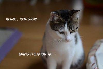 fc2blog_20140124061935733.jpg