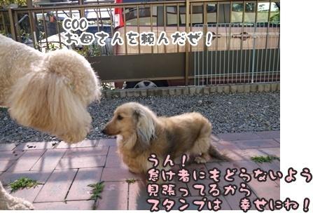 2012-5-17ちぃ坊スタンプ旅立ち090