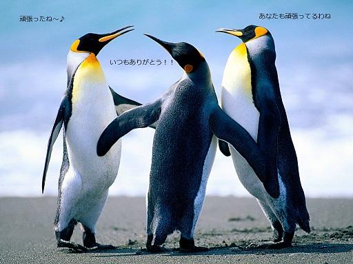 Penguins_20121116162722.jpg