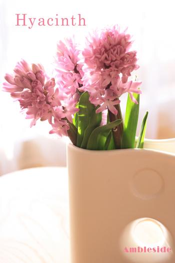 IMG_8529-Hyacinth.jpg