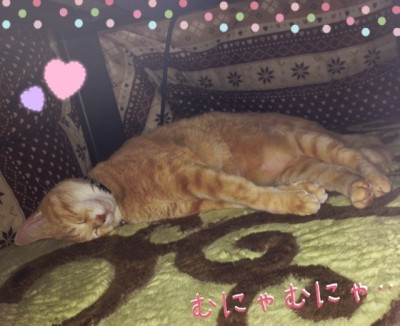 blog3_201312310033527b5.jpg