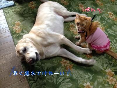 blog3_201401242303044ac.jpg