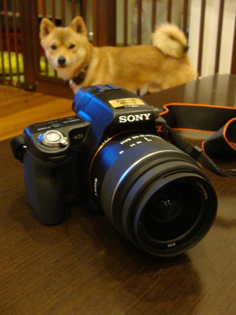 カメラレンズ購入