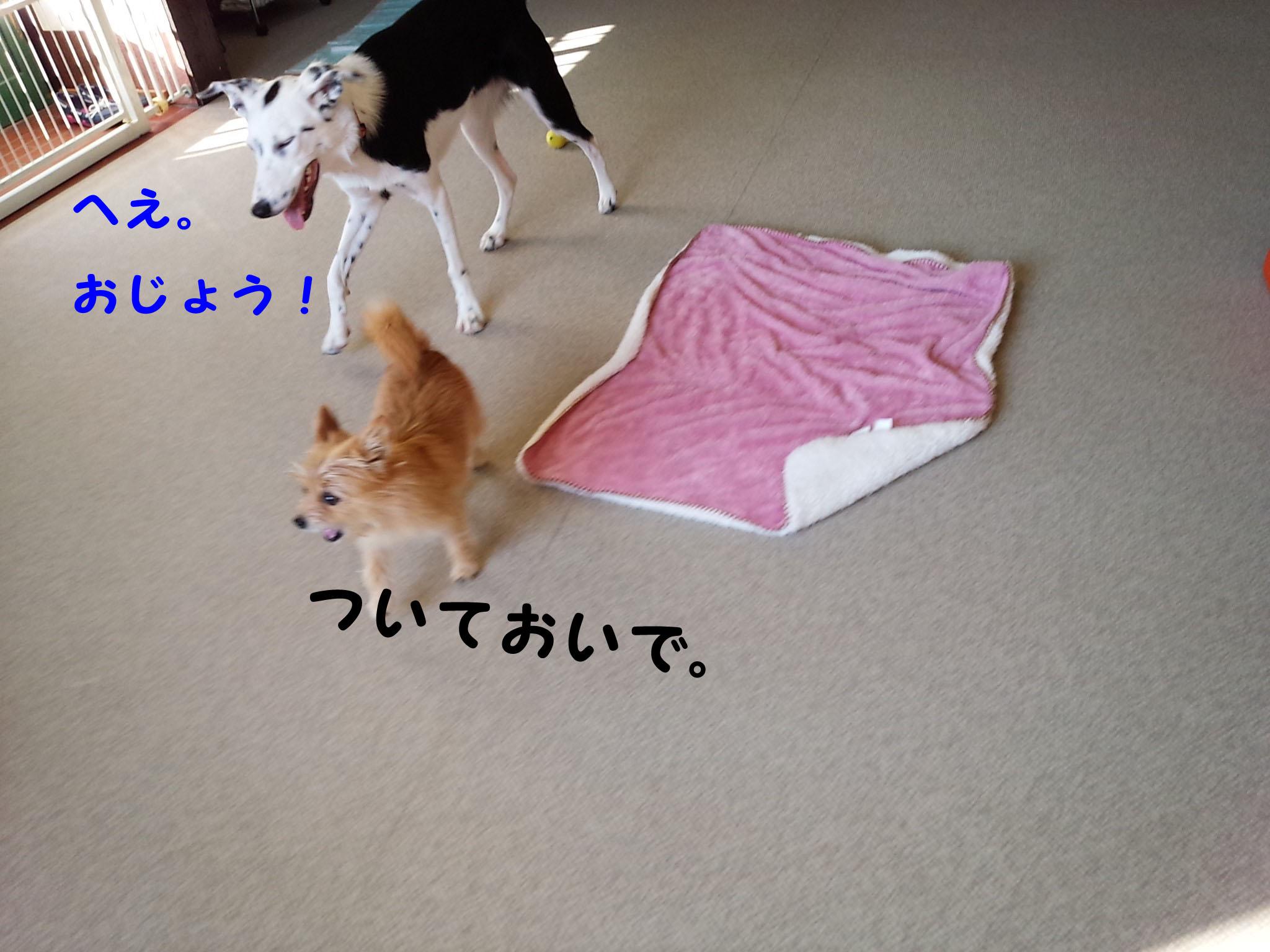 DSC_8667.jpg