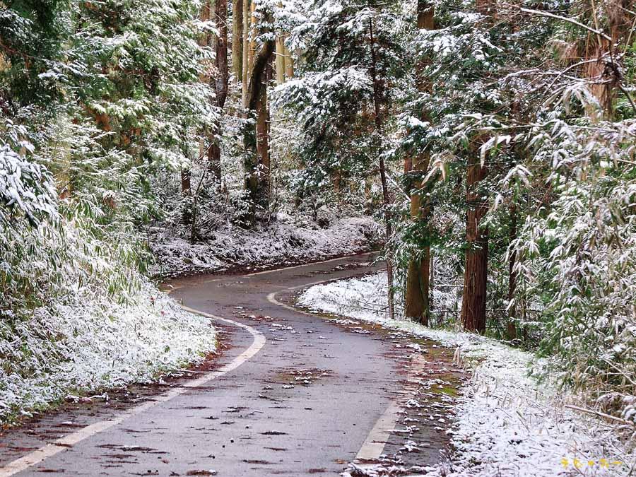 雪景色の帰路b