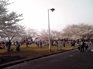 大泉緑地 2012 桜広場(外側から:その2)