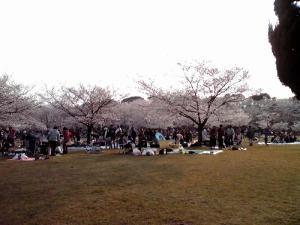 大泉緑地 2012 桜広場の中(その1)