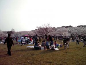 大泉緑地 2012 桜広場の中(その2)