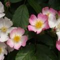 fleurs de terre