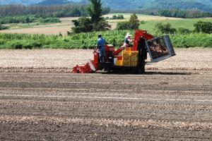 玉ネギ収穫選別機