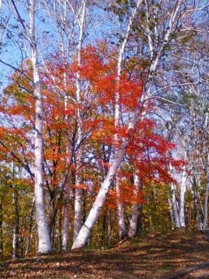 紅葉なまこ山2010②