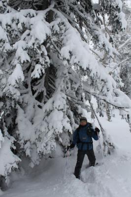 旭岳赤エゾ松の木の根元