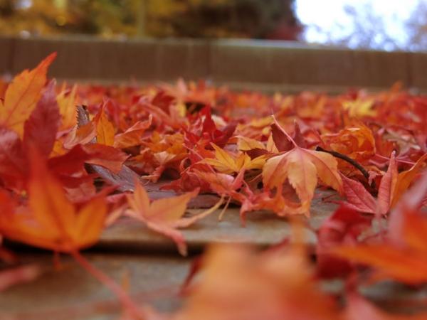 屋根の落ち葉