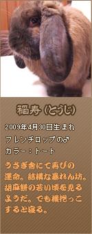 フレンチロップ-稲寿
