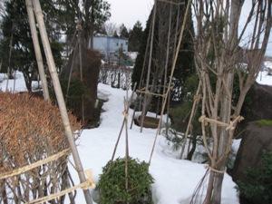 2月1日の庭 (2)
