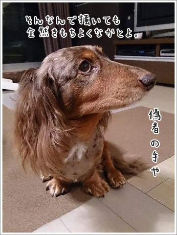 fc2_2014-12-12_03.jpg