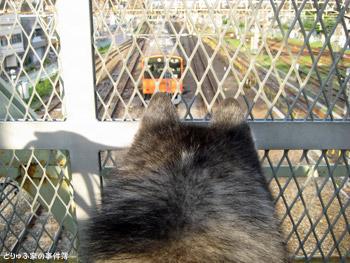 オレンジ電車とポトフ