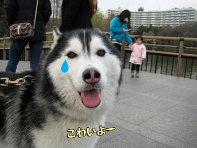 泣き虫ポトフ