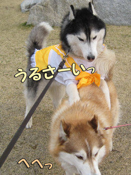 ポト子&リリーちゃん