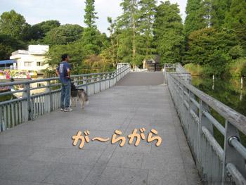 七井橋もガ~ラガラ