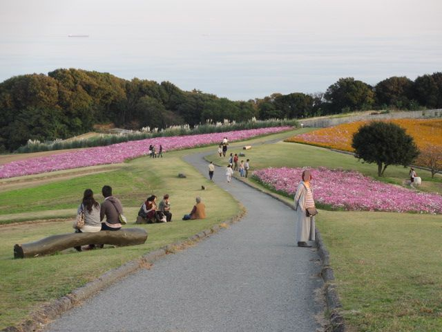 あわじ花さじき2013年11月-16