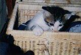 猫ママ@虎鐵