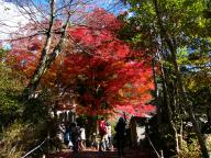 岩屋堂の祠前の紅葉