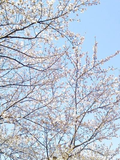 春~上と下。