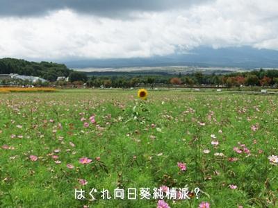 20100918-17.jpg