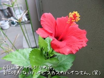 20100924-03.jpg