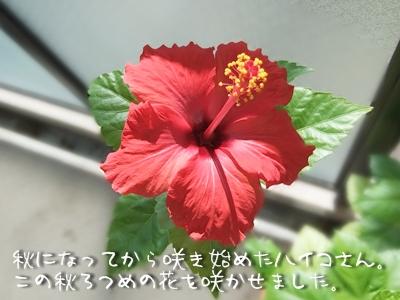 20101011-03.jpg