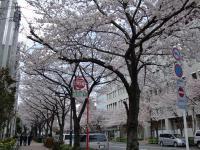 健楽@月島・桜