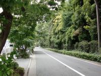田なべ@新宿御苑・緑
