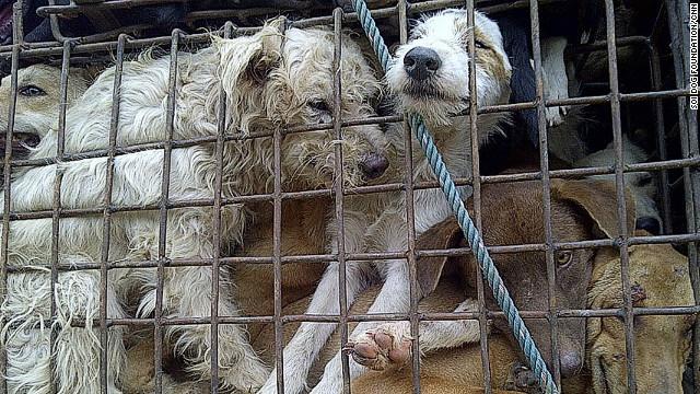 thailand-dogs-smugler.jpg