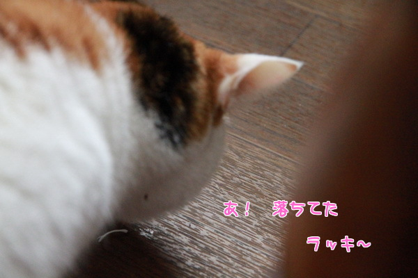 20140117005311c6f.jpg