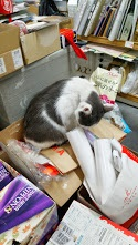 oshimai_cat.jpg