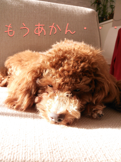 fc2_2013-12-15_22-11-06-724.png