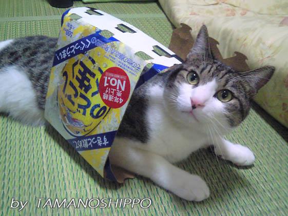 のごこしと猫2
