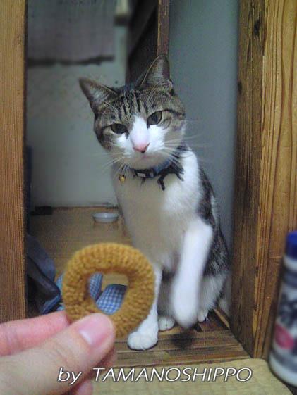 おもちゃを狙っている猫