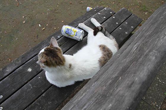 のんべ猫さん発見