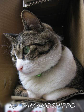 お外を眺める猫