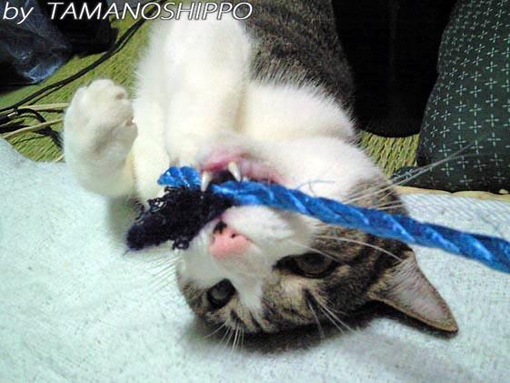 パワフルな猫