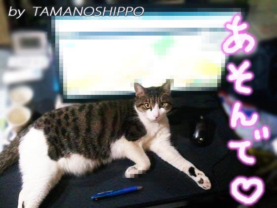 PCの前でイタズラする猫