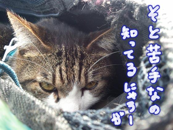 うらめし猫?
