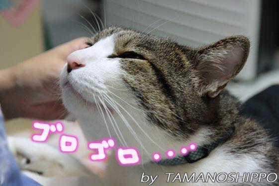 猫の耳そうじでゴロゴロ・・・