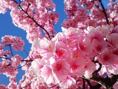 桜0613
