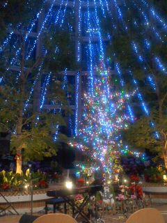 2013クリスマスフェスタ@食花センター